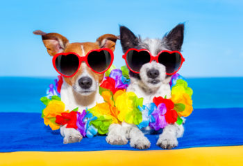 Celebrate National Sunglasses Day