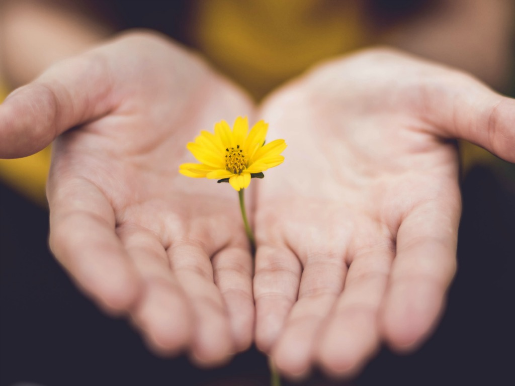 Closeup-of-hands-outstretched-holding-small-yellow-flower