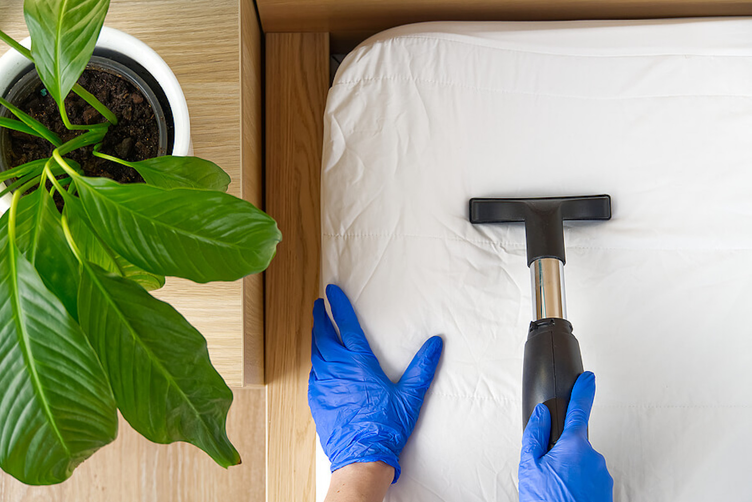 Spring cleaning image includes blue rubber gloves, vacuum and leafy houseplant.